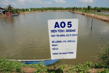 ASC-certified natural pond for Pangasius production.