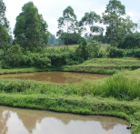 Small-scale pond in Kenya.